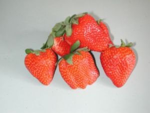 Adina strawberry