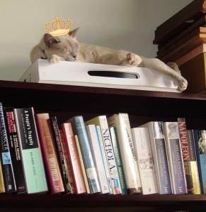 Emma on top of the bookshelf