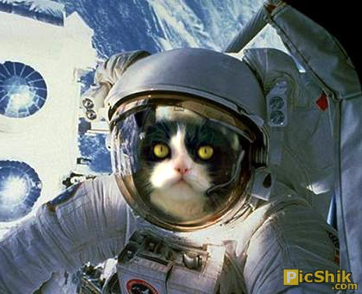 Cat in Space Suit (page 3) - Pics about space