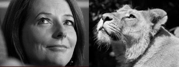 Gillard with Lioness